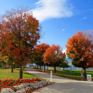 hortus Galabau Herbst garten
